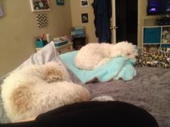 more sleepy pups